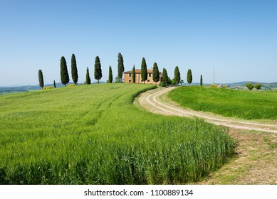 Famous farm house with cypress trees in front of the villa and a barley wheat field with a curvy driveway under a clear blue sky in Pienza, Val d'Orcia in Tuscany, Italy.