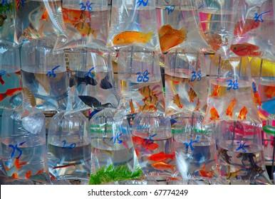"""Famous """"Fish market"""" in Hong Kong, China"""