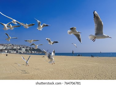 famous haeundae beach in busan south korea
