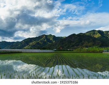 A famous Hakka country in Taiwan, Kaohsiung called Mino. The mountain and green field reflect on the water. Admire  nature of the entire town of Mino.