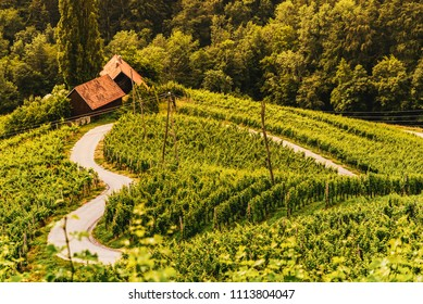 Famous Heart shaped wine road in Austria , Slovenia in summer, Heart form - Herzerl Strasse with a couple, surrounded with vineyards in summer. Tourist spot