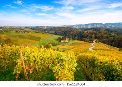 Famous Heart shaped wine road in autumn, view from Spicnik near Maribor in Slovenia.