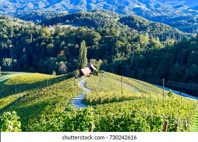 Famous Heart shaped wine road in Slovenia in autumn, Heart form - Herzerl Strasse, vineyards in autumn, Spicnik