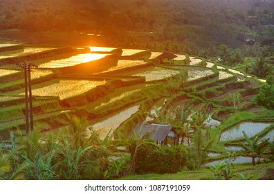Famous Jatiluwih Rice terraces on Bali during sunrise, Indonesia