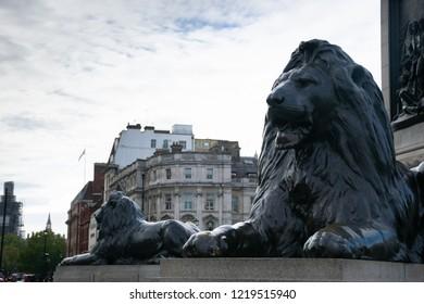 Famous Lion statues in Trafalgar Square, London