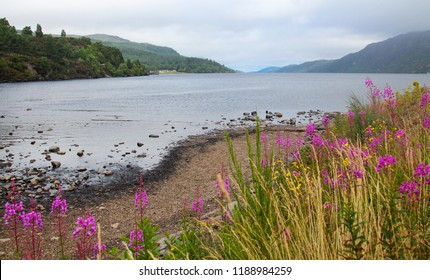 Famous Loch Ness as seen from Fort Augustus.with  magenta Fireweed flowers. Central Highlands of Scotland.  Summer cloudy day.  Copy space