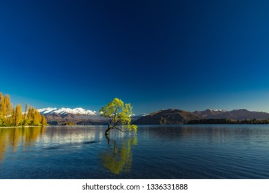 The famous Lonely tree of Lake Wanaka and snowy Buchanan Peaks, South Island, New Zealand