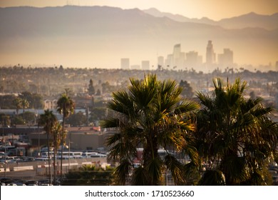 Famous Los Angeles palm trees with a polluted, smoggy Downtown in the background. Focus on foreground tree elements.