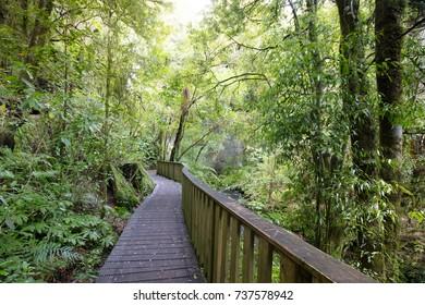 The famous Mangapohue Natural Bridge near Waitomo Caves on New Zealand's north island.
