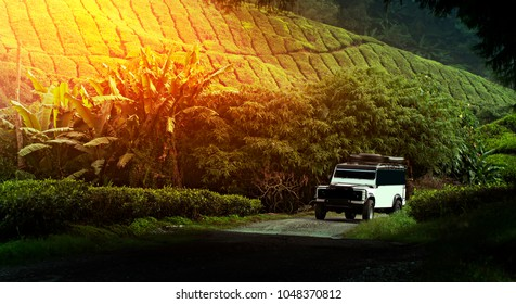 Famous off-road vehicle in green tea plantation