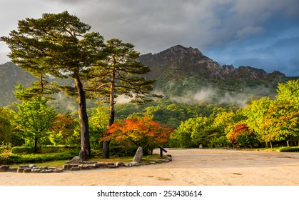 famous pair pines in the morning light - symbol of Seoraksan National Park, South korea