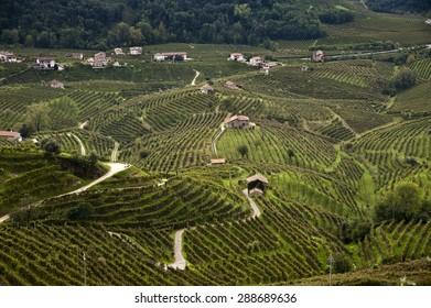 Famous Prosecco's Vineyards, Valdobbiadene, Italy