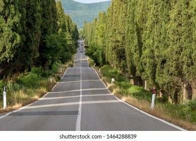 The famous road bordered by cypress trees leading to the charming village of Bolgheri, Tuscany, Italy
