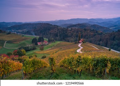 Famous Slovenian Heart shaped wine road in Slovenia in autumn, Heart form - Herzerl Strase  in sunset, surrounded with vineyards in autumn; Dreisiebner