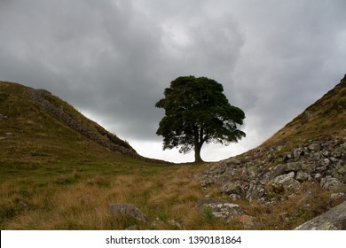 The famous Sycamore Gap in the North East of England.