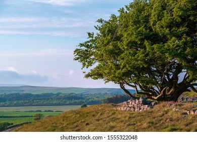 The Famous Sycamore Gap On Hadrians Wall, North England.
