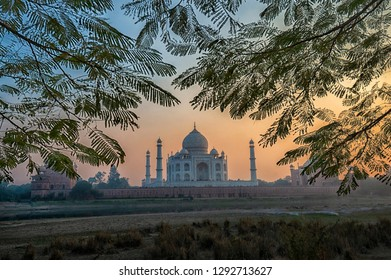 Famous Taj Mahal in India framed by tree branches