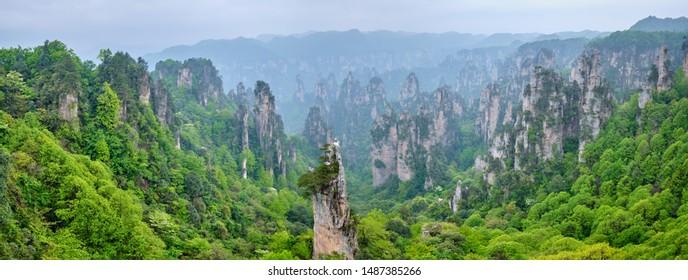 Famous tourist attraction of China - Panorama of Zhangjiajie stone pillars cliff mountains in fog clouds at Wulingyuan, Hunan, China