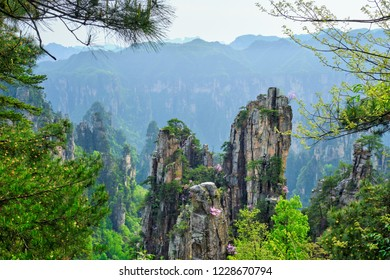 Famous tourist attraction of China - Zhangjiajie stone pillars cliff mountains at Wulingyuan, Hunan, China