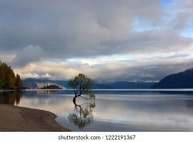 Famous Tree Growing in Lake Wanaka, Central Otago  New Zealand