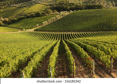 Famous Tuscany vineyards near the Florence in Italy
