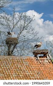 das berühmte Storchendorf Zywkowo, Warmia-Masuria, Polen
