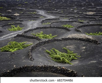famous vineyards of La Geria on volcanic soil Lanzarote Island Spain