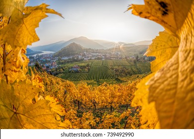 Famous vineyards in Wachau, Spitz, Austria