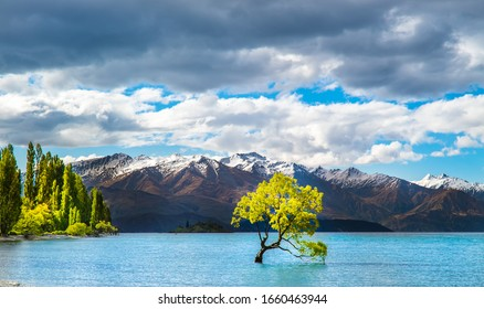 Famous Wanaka lake on the south island of New Zealand with a tree groing in the water