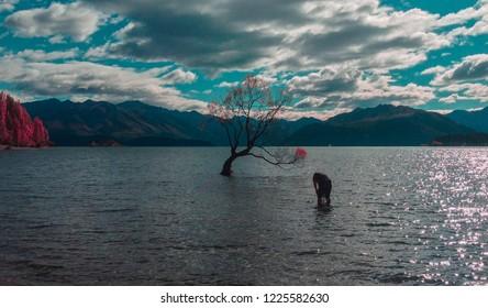 famous Wanaka Tree growing in Lake Wanaka in Wanaka town, New Zealand