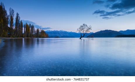 The famous Wanaka tree or Lonely Tree of Wanaka, maybe the most photographed tree in the world. Wanaka, Otago, South Island, New Zealand