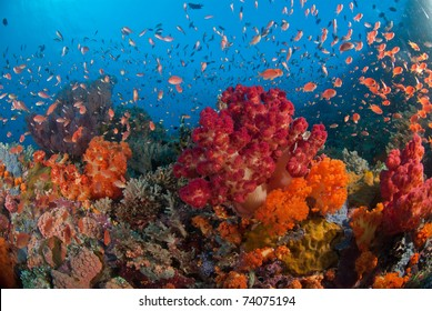 Fan corals and fish in a colourful reef, Raja Ampat, Indonesia