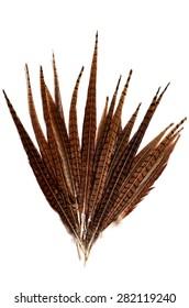 fan of feathers