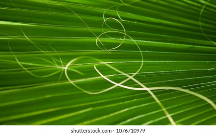 fan palm tree leaf natural floral abstract background