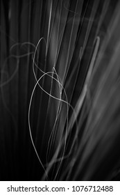 fan palm tree leaf natural floral abstract background, monochrome