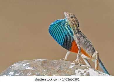 Lizard Images, Stock Photos & Vectors | Shutterstock