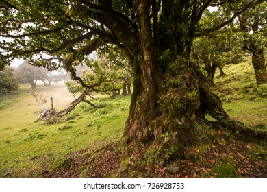 Fanal old Laurel trees location, famous hiking trail on Madeira island, Portugal.