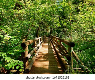Fanciful Forest Footbridge - The footbridge over Delta Creek in the old growth nature area at Delta Campground - near Blue River, OR