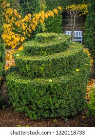 Fancifully trimmed evergreen shrub in the park