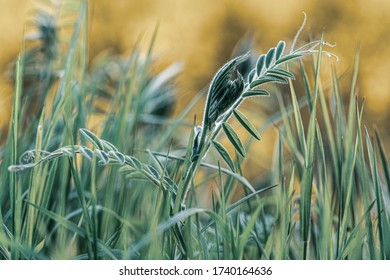fancy green plants on blurred background