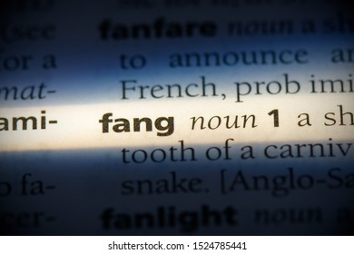 fang word in a dictionary. fang concept, definition.