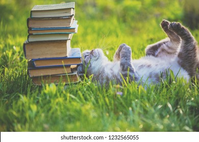 Fanny cat lying on the back on the grass near pile of old books. Cat enjoying life