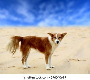 fanny red head dog on sand sea beach