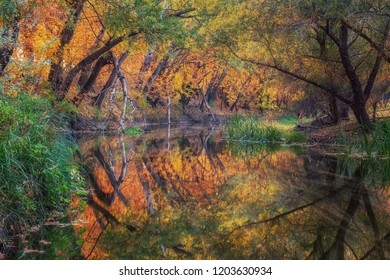 Fantastic autumn forest and long exposure photo of river