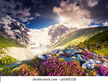 Fantastic colorful sunset and bloom rhododendron at the foot of Tetnuldi glacier. Dramatic overcast sky. Upper Svaneti, Georgia, Europe. Caucasus mountains. Beauty world.