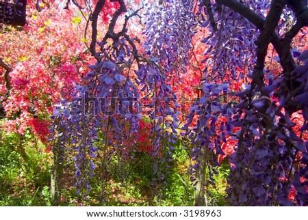 Fantastic colors spring flowers japan stock photo edit now 3198963 fantastic colors of spring flowers japan mightylinksfo