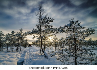Fantastic evening landscape in a colorful sunlight. Dramatic wintry scene. National Park Carpathian, Ukraine, Europe. Beauty world. Retro style filter. Happy New Year. Snow forest