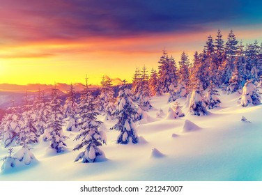 Fantastic evening landscape glowing by sunlight. Dramatic wintry scene. Natural park. Carpathian, Ukraine, Europe. Beauty world. Retro filter. Instagram toning effect. Vivid violet. Happy New Year!