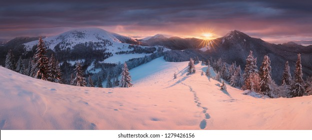 Fantastic evening and morning winter landscape. Colorful overcast sky. Beauty world  Magical snow covered tree. In anticipation of the holiday. Dramatic wintry scene. Carpathian mountains, Europe