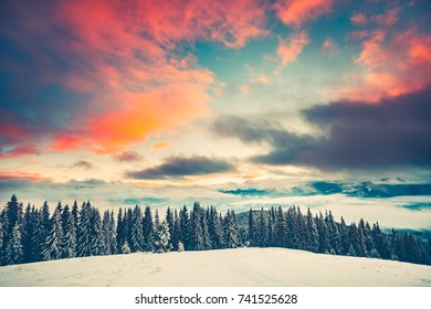 Fantastic evening winter landscape with snow slope and pine tree forest. Dramatic sunset pink clouds sky. Nature landscape. Travel background. Retro toning filter. Holiday, travel, sport, recreation